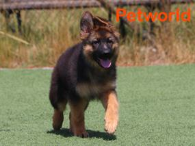 Shadow von Petworld